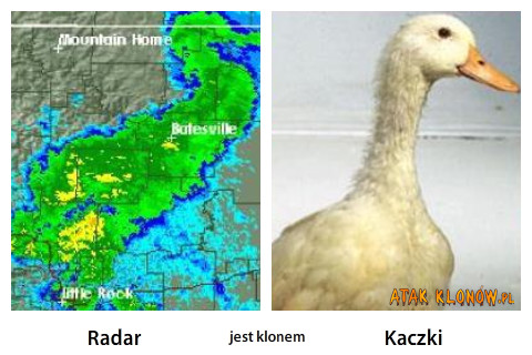 Radar i... – Radar Kaczki