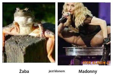 Żaba i... – Żaba Madonny