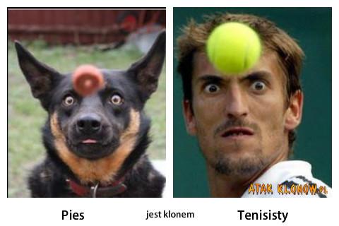 Pies i... –
