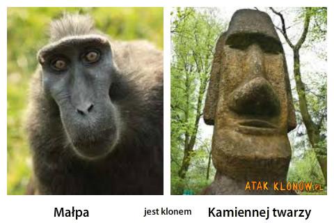 Małpa i... –