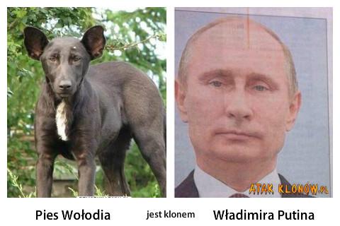 Pies Wołodia i... –